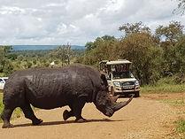 Chasin' Africa Rhino