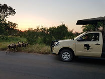 Chasin' Africa Wild Dogs