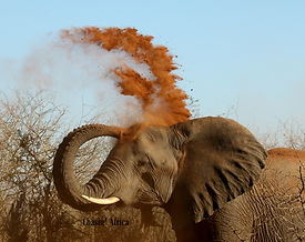 Red Dust Elephant