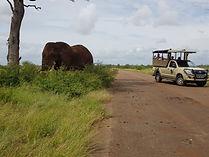 Chasin' Africa Elephant