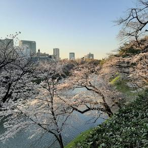Japón en tiempos de coronavirus: del caso del Diamond Princess al estado de emergencia