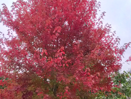 Farewell to Fall: Seasons and Estate Planning