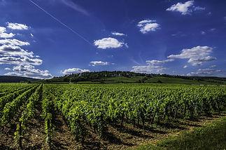 vines-2766552_1920.jpg