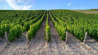 vineyards-5480244_1920.jpg