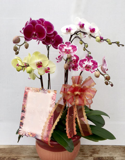 Assorted Color Orchids Arrangement