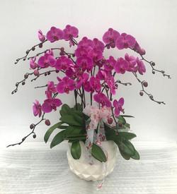 Large Purple Orchids Arrangement