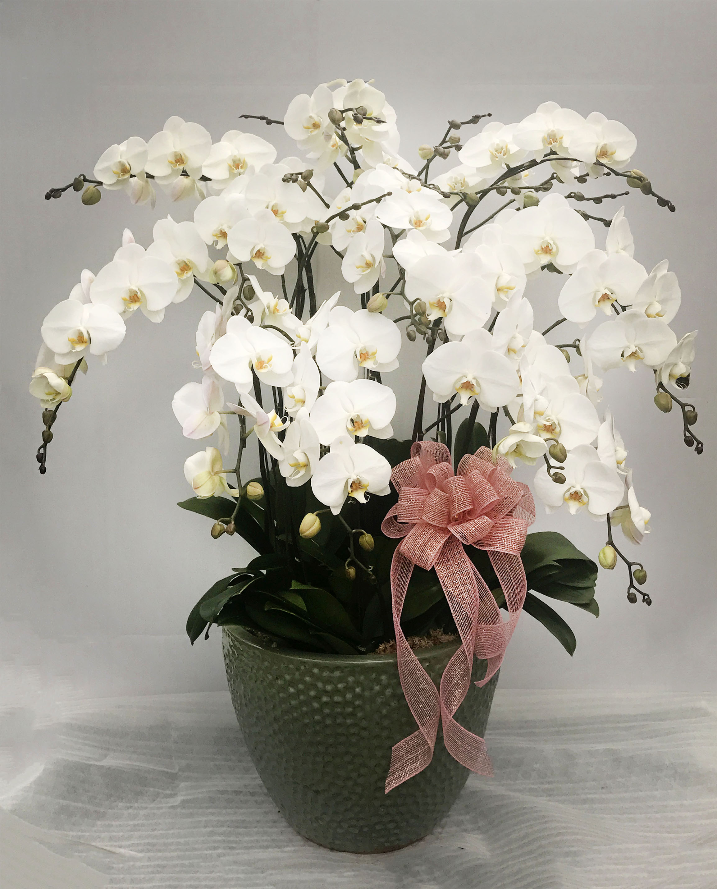 Large White Orchids Arrangement