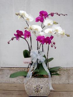Large White and Purple Arrangement