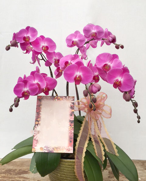 Large Purple Orchids Arrangement