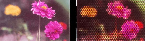 תמונה בה העצמים בשדה הויזואלי משורטטים ברמת דיוק נמוכה בהרבה מזו של חוויית הראיה שלנו