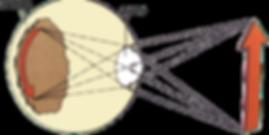 Eye_Science_7.png