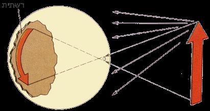 אור המגיע מהעולם החיצון עבר דרך החור ומוקרן על מערך תאי-חישה ברשתית הנמצאים בצד האחורי