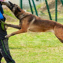 Other Jobs that require a Security Services Licence