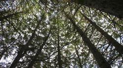 arbres_IOT 3
