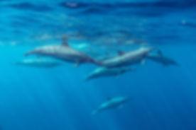 Delfines Spinner