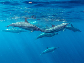 DOLPHINS : THE SEA HUMANS ( 10 awesome facts )