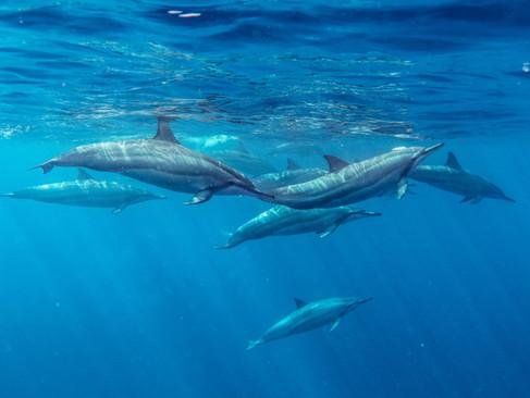 Τα Δελφίνια είναι Αδέλφια