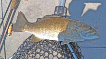 Kentucky Lake Fishing Report