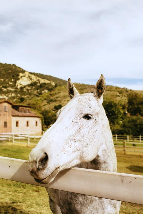 Klentner-Ranch-Styled-Shoot-0006.jpg