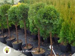 Rośliny u Marcina