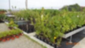 Nasze rośliny do Twojego Ogrodu