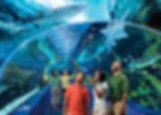 Thủy_cung_Ripley's_aquarium_-_Hưng_Long_