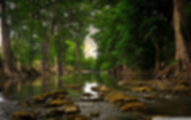 trees_roots_near_river-wallpaper-1920x1200.jpg