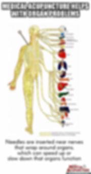 Nerve root meme EMA (2).jpg