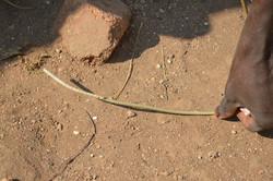 Nsangu, Salima (43).JPG