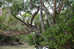 Kandewe bridge Rumphi North (4).JPG