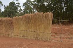 Mbambake, Dedza (51).JPG