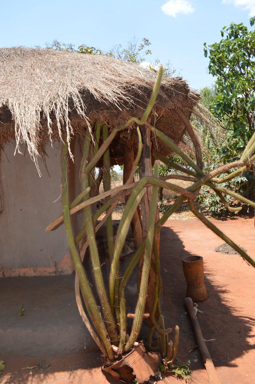 Mwantothera, Nzimba (17).JPG