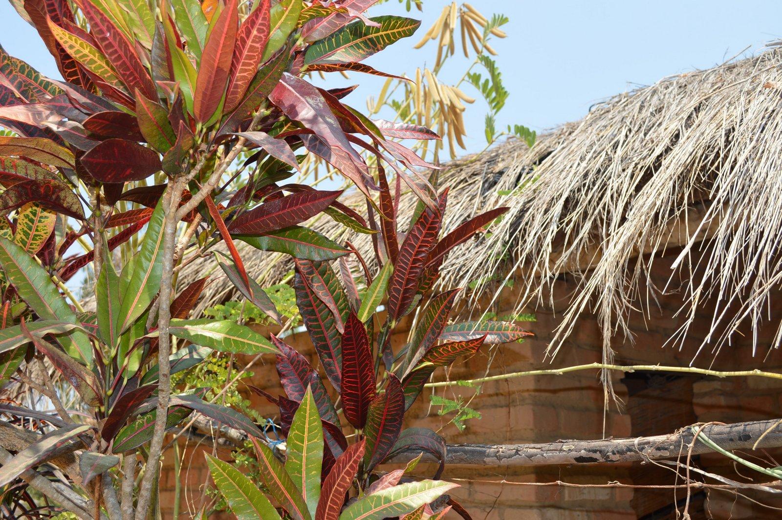 Kakholowa, Nkhata Bay (4).JPG
