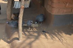 Kadwazi, Machinga (15).JPG
