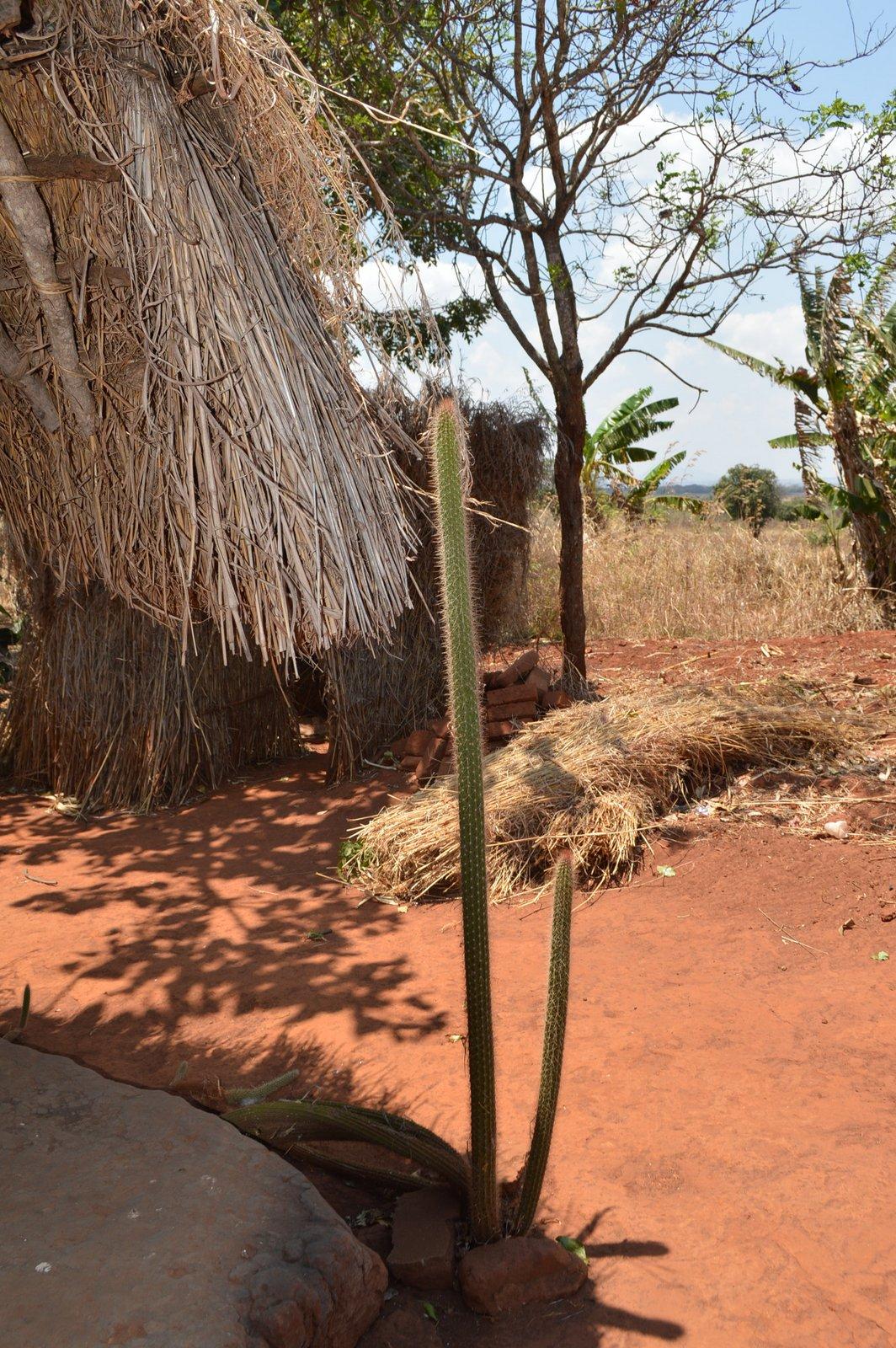 Mwantothera, Nzimba (44).JPG