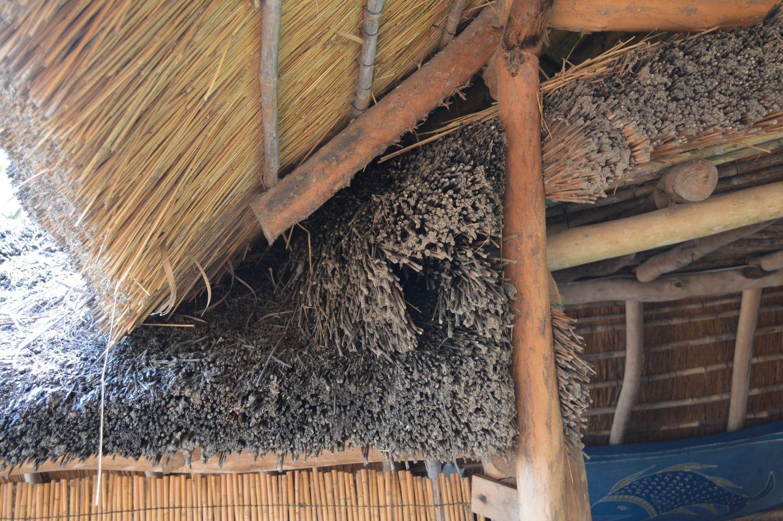 Gecko Lodge, Mangochi (38).JPG