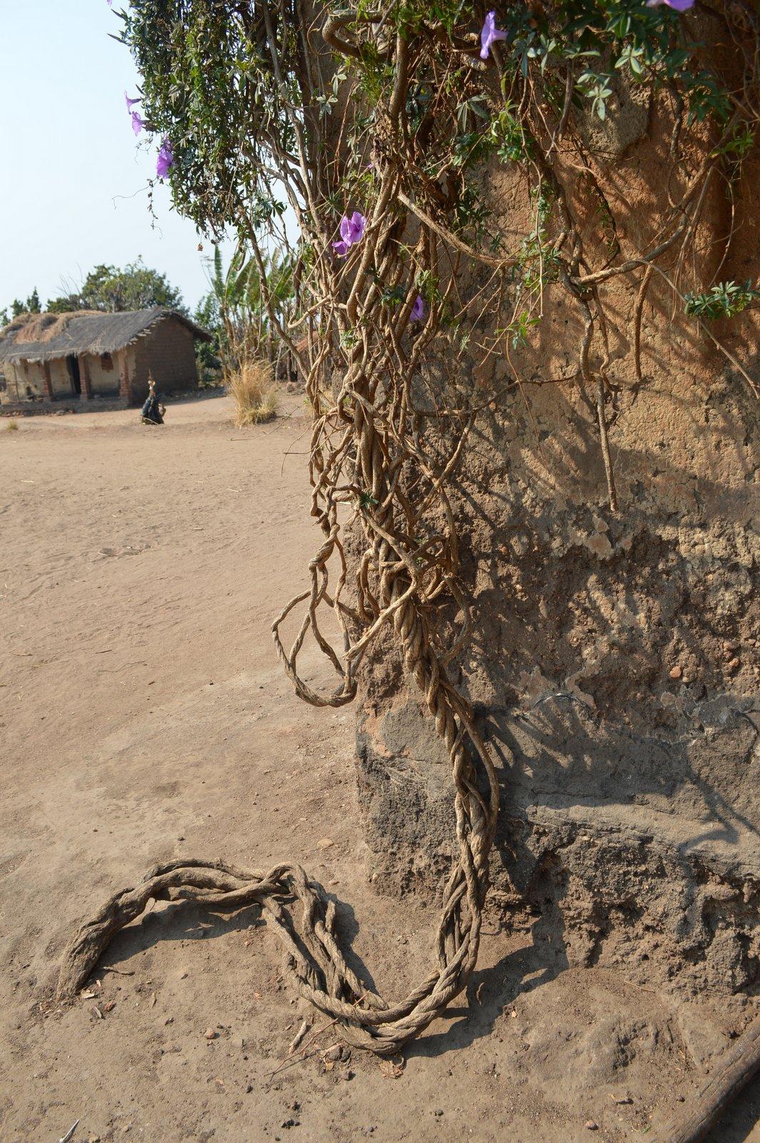 Nsangu, Salima (8).JPG