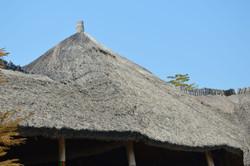 Gecko Lodge, Mangochi (48).JPG