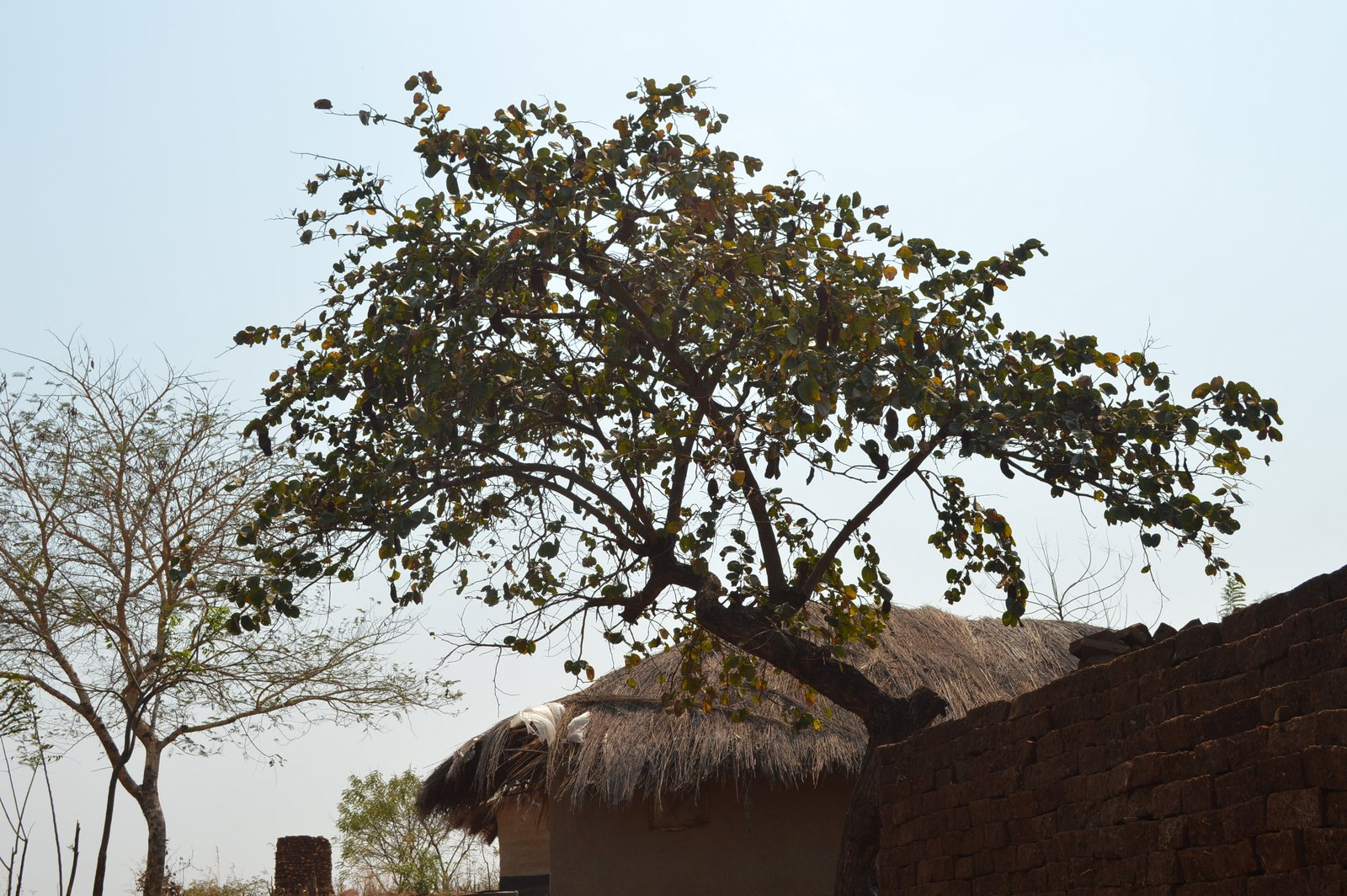 Chigwiti, Salima (26).JPG