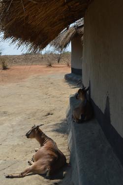 Nsulila, Kasungu (42).JPG
