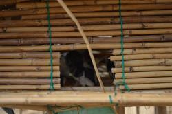 Chipita, Karonga (3).JPG
