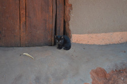 Mwantothera, Nzimba (2).JPG