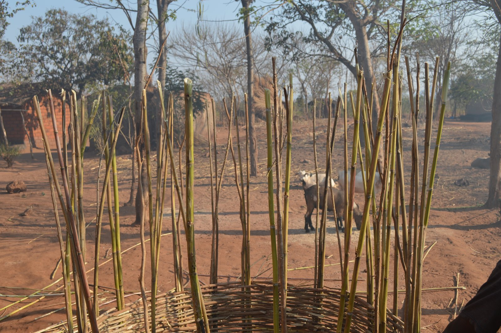 M' buka, Kasungu (3).JPG