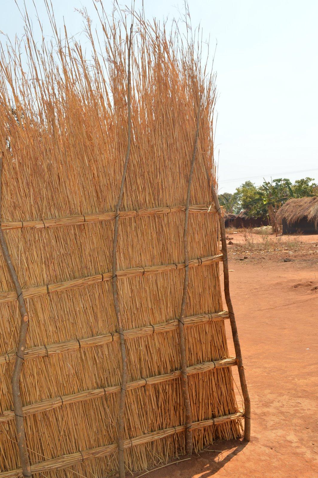 Thoja, Nchinji (12).JPG
