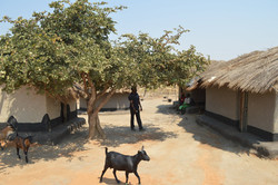 Nsulila, Kasungu (50).JPG