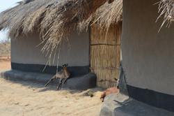 Nsulila, Kasungu (43).JPG