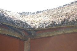 Gecko Lodge, Mangochi (45).JPG