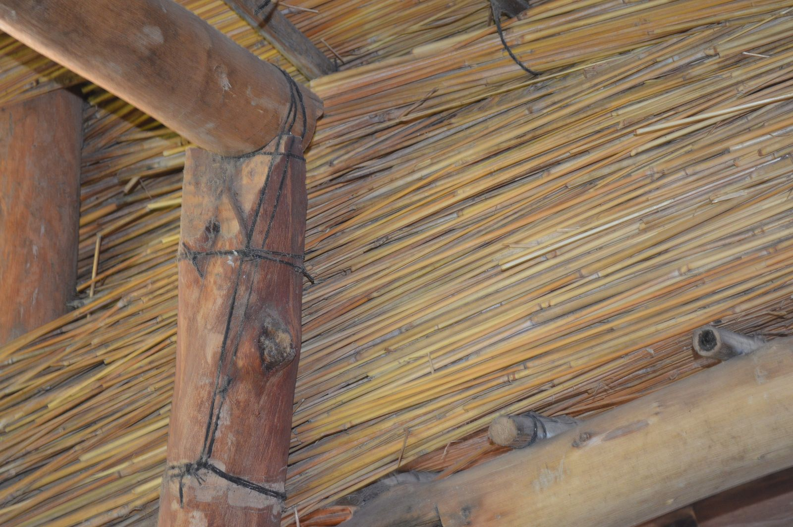 Gecko Lodge, Mangochi (35).JPG