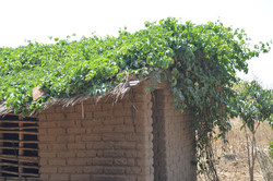 Mwambo, Phalombe (13).JPG