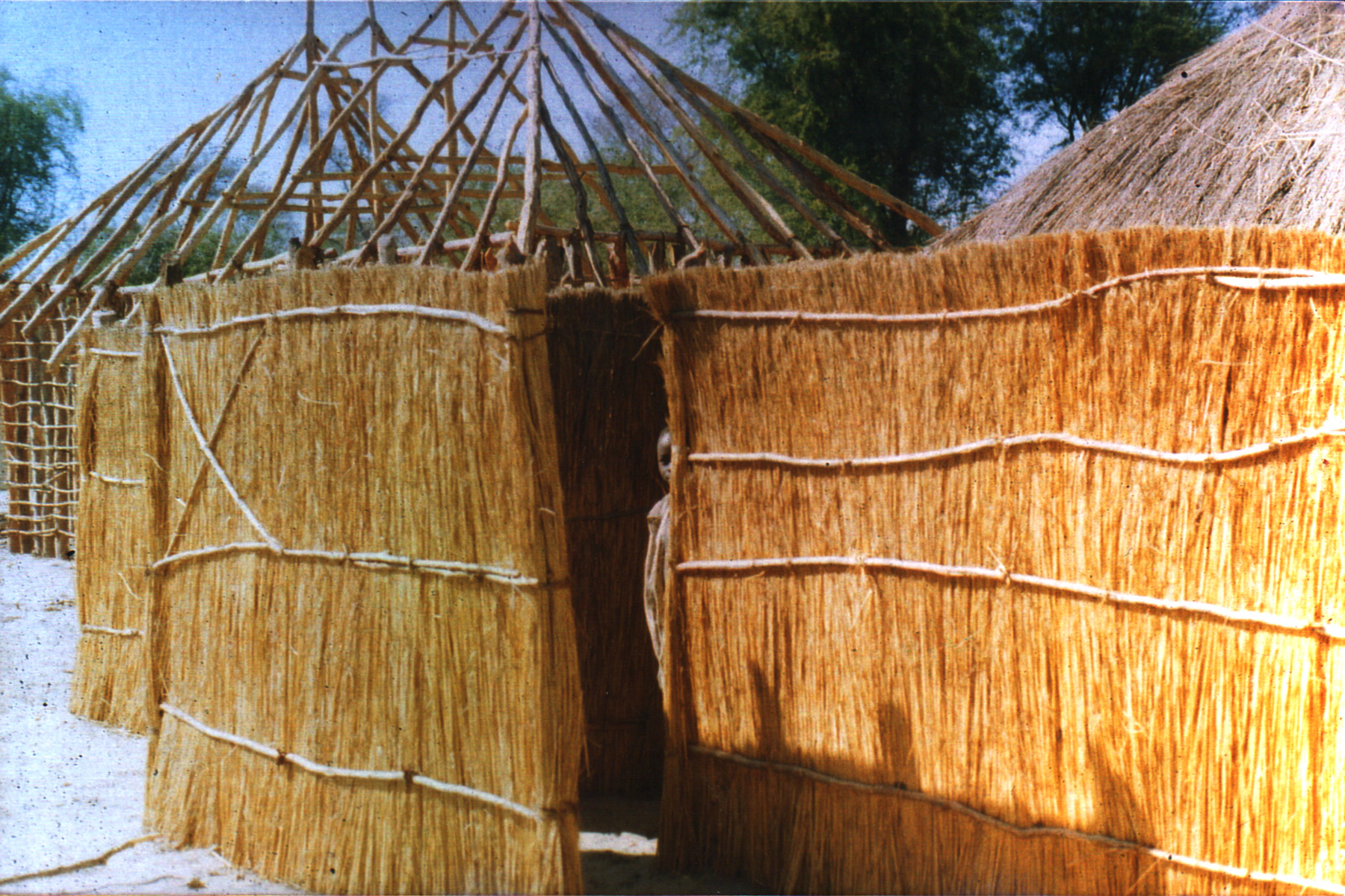 Zambia boy looking from behind reed fence.jpg
